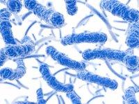 anaerobe bacterien